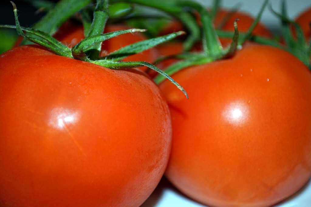 Tomatoes Are Not Poisonous!